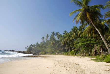 Tropical paradise in Sri Lanka with palms hanging over the beach and turquoise sea photo