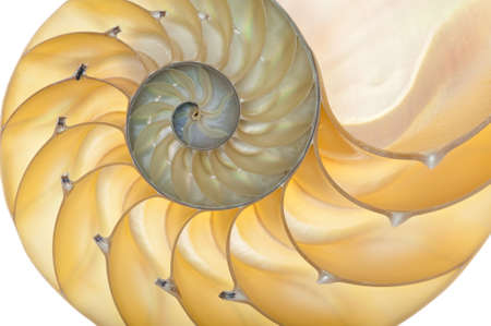 Detailed photo of a halved backlit  shell of a chambered nautilus (Nautilus pompilius) Stock Photo - 9055112