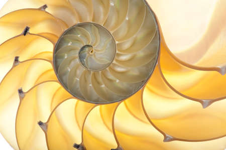 float: Detailed photo of a halved backlit  shell of a chambered nautilus (Nautilus pompilius)