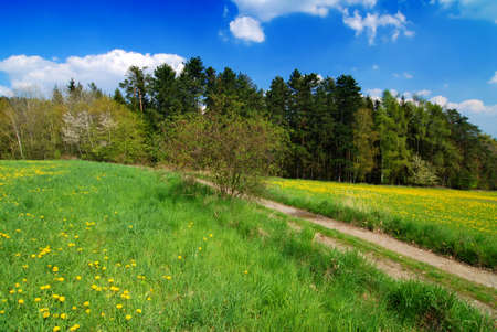 Beautiful spring landscape with blooming yellow dandelions Stock Photo - 9117262