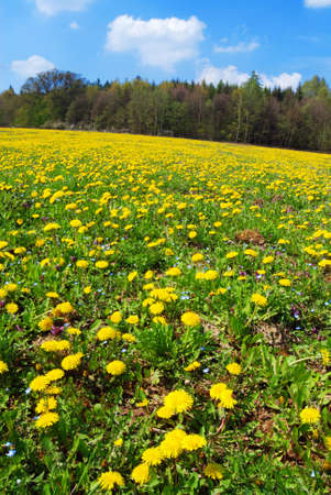 Beautiful spring landscape with blooming yellow dandelions and cherry tree Stock Photo - 9117272
