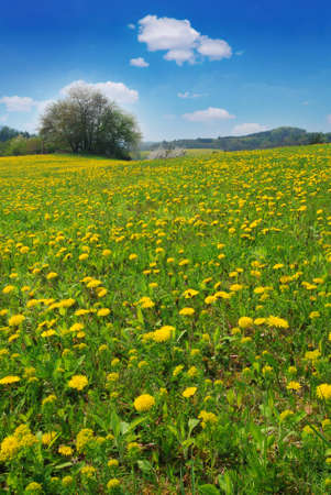 Beautiful spring landscape with blooming yellow dandelions and cherry tree Stock Photo - 9117263