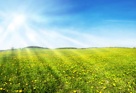 panoramatic: Beautiful spring panoramatic shot with a dandelion meadow and shining sun