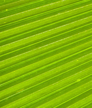 Macro of a green palm leaf with diagonal pattern and dew drops photo
