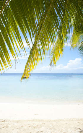 Beautiful tropical beach with white sand and palm in the Maldives