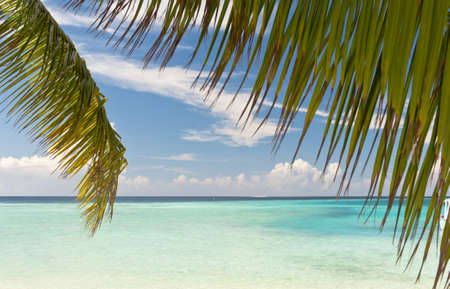 turquise: Beautiful tropical turquise sea seen through the palm leaves in the Maldives