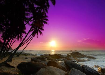 violet: Beautiful colorful sunrise over sea and boulders seen under the palms on Sri Lanka