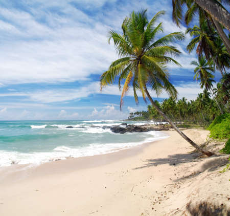 tangalle: Tropical paradise in Sri Lanka, Tangalle with palms hanging over the beach and turquoise sea