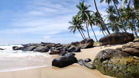 Tropical paradise in Sri Lanka, Tangalle with palms hanging over the beach and turquoise sea. Panorama photo