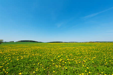 Beautiful spring panoramatic shot with a dandelion meadow photo