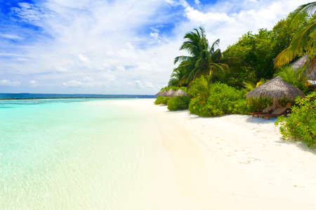 Beautiful tropical paradise in Maldives with coco palms hanging over the white and turquoise sea Фото со стока