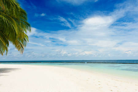 unspoilt: Beautiful tropical paradise in Maldives with coco palms hanging over the white and turquoise sea Stock Photo