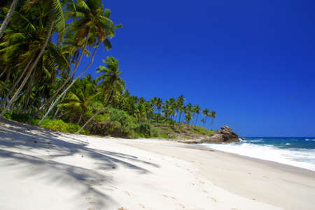 Tropical paradise in Sri Lanka, Tangalle with palms hanging over the beach and turquoise sea