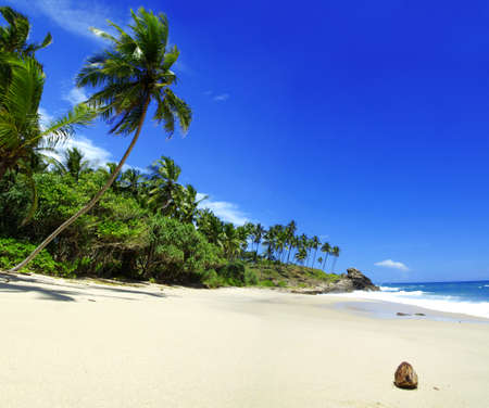 Tropical paradise in Sri Lanka, Tangalle with palms hanging over the beach and turquoise sea photo