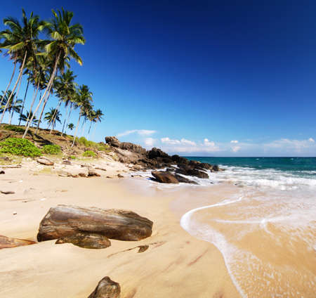 Tropical paradise in Sri Lanka, Tangalle with palms hanging over the beach and turquoise sea Stock Photo - 10428774