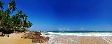 panorama beach: Paradiso tropicale in Sri Lanka con le palme appeso sopra la spiaggia e mare turchese. Panorama