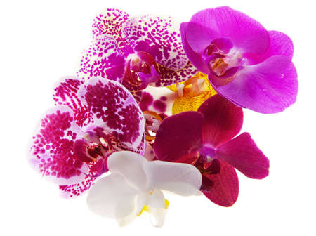 Heap of 7 various phalaenopsis orchid blooms photo