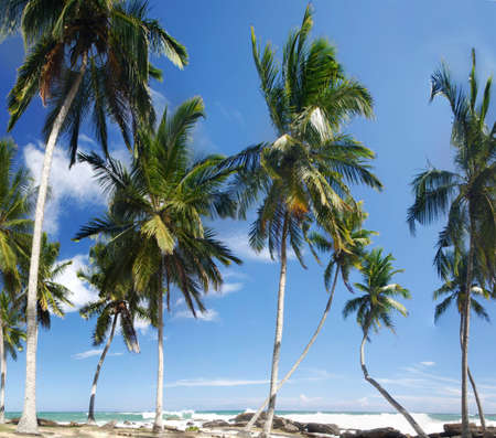 Beautiful palm groove and turquoise tropical sea photo