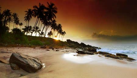 La salida del sol intenso de gran belleza en la plams de coco en Sri Lanka playa. Foto panorámica
