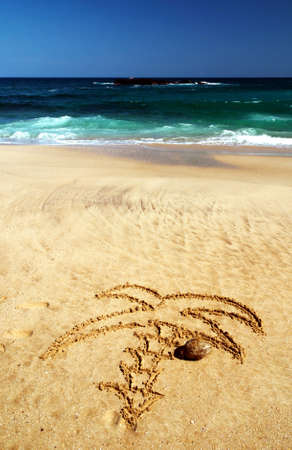 Palm drawn in the wet sand of the tropical beach of Sri Lanka near the azure sea Stock Photo - 11095284