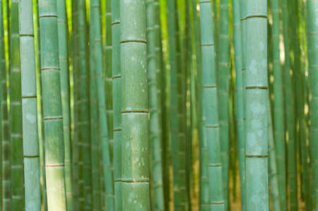 Beautiful bamboo forest in near Arashiyama, Japan Stock Photo - 11257687