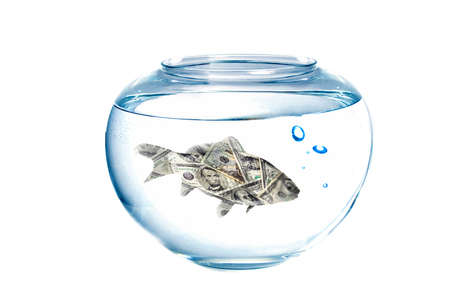 bussines: Small dollar in a fish tank with bubbles of air