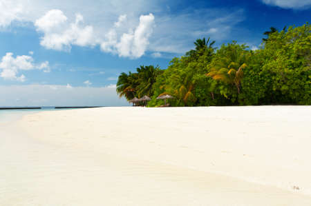 coconut trees: Beautiful tropical paradise in Maldives with coco palms hanging over the white and turquoise sea Stock Photo