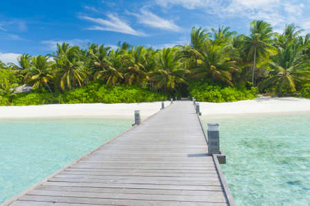 maldivian: Tropical Maldivian paradise - a jetty leading to a beautiful tropical atoll hiden in the azure Indian ocean.