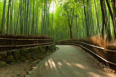 Famous bamboo grove at Arashiyama, Kyoto - Japan Stock Photo