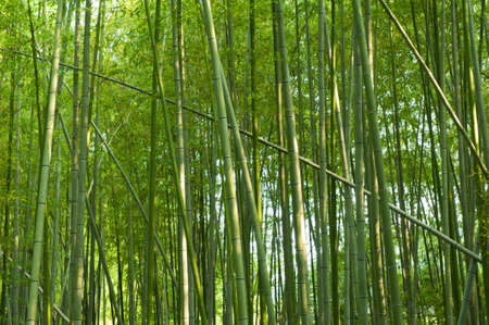 Beautiful bamboo forest in near Arashiyama, Japan photo