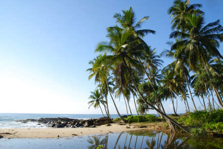Tropical paradise on Sri Lanka with palms hanging over the white beach and turquoise sea Stock Photo - 11425501