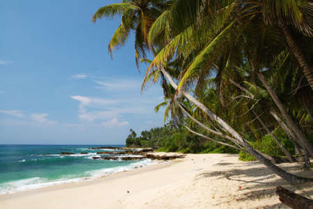 Tropical paradise on Sri Lanka with palms hanging over the white beach and turquoise sea photo