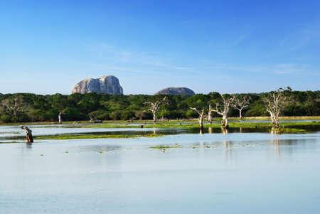 Beautiful landscape of the lake and Elephant rock in the Yala national park, Sri Lanka photo