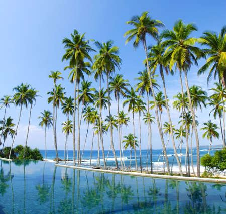 Coconut palms are reflecting in the water. There is a pool in the front and sea in the background so it looks like if the palms grew from the water photo