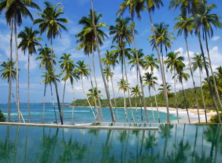 Coconut palms are reflecting in the water. There is a pool in the front and sea in the background so it looks like if the palms grew from the water Stock Photo - 12000476