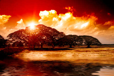 Fantasy sunset over acacia trees reflecting in water in Africa