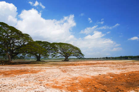 Acacia trees growing near the dried lake in African desert Stock Photo - 12000474