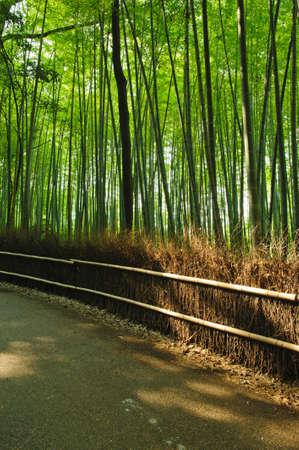 Famous bamboo grove at Arashiyama, Kyoto - Japan photo