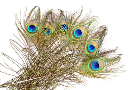 Detailed photo of a bunch of beautiful vivid peacock feathers isolated on white photo