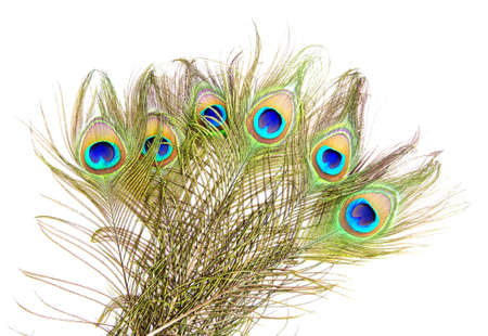 plumas de pavo real: Foto detallada de un montón de hermosas plumas de pavo real vivo aislado en blanco