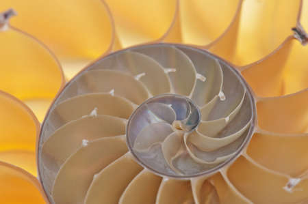 chambered: Detailed photo of a halved backlit  shell of a chambered nautilus (Nautilus pompilius)