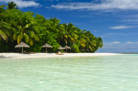 Beautiful tropical paradise in Maldives with coco palms hanging over the white beach and turquoise sea