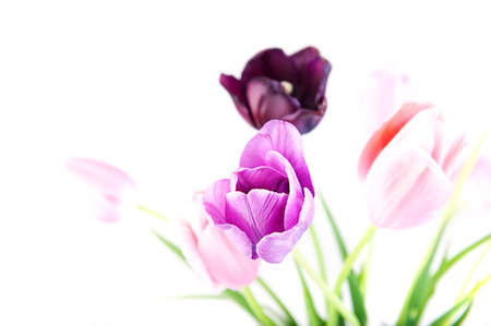 Bunch of beautiful bright spring flowers - colorful tulips against white background. Shallow DOF Stock Photo - 13614316