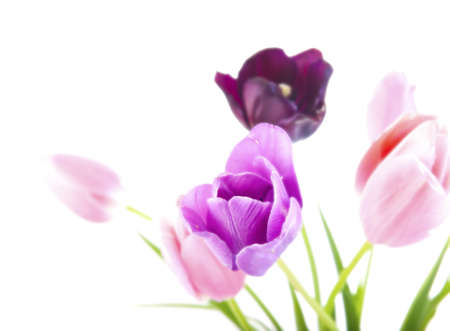 Bunch of beautiful spring flowers - colorful tulips against white background with shallow DOF and ultrasoft light