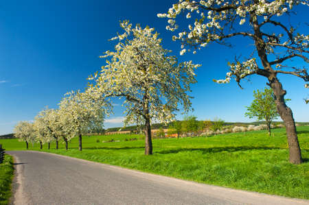 Road in the country and blooming trees in the spring photo