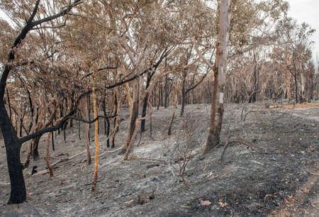 bushfire: Australian forest after the serious bushfire Stock Photo