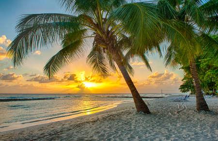 Magnifique coucher de soleil sur la mer avec une vue à palmiers sur la plage de sable blanc sur une île des Caraïbes de la Barbade