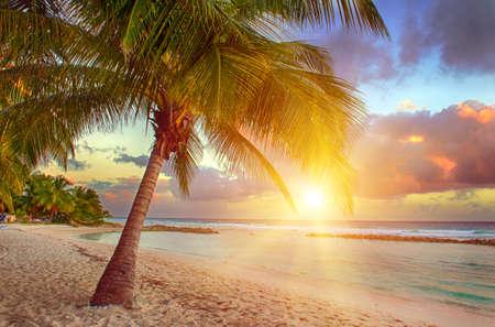Prachtige zonsondergang over de zee met het oog op de handpalmen op het witte strand op een Caribische eiland Barbados Stockfoto
