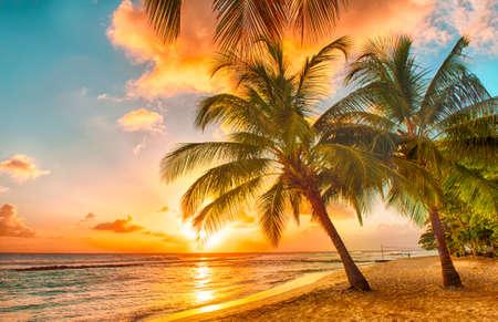 Landschap: Mooie zonsondergang over de zee met uitzicht op palmen op het witte strand op een Caribische eiland Barbados Stockfoto