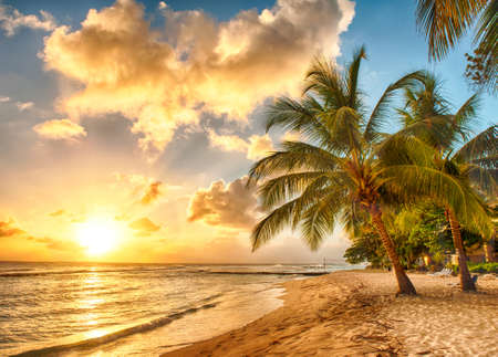 Beautiful sunset over the sea with a view at palms on the white beach on a Caribbean island of Barbados 写真素材